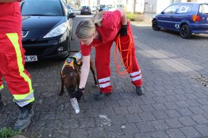 Mitglied der Mantrainer Andernach hält einem Hund die Tüte mit der Geruchsspur unter die Nase.