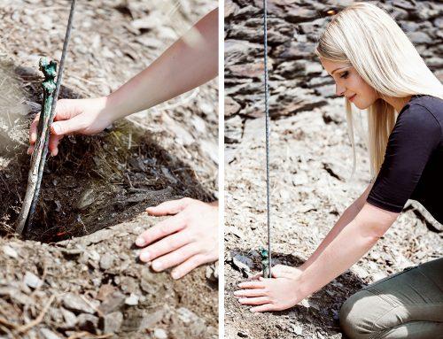 Plan R: Er wächst wieder, der Wein – Sarah Hulten pflanzt ihre Rieslingreben