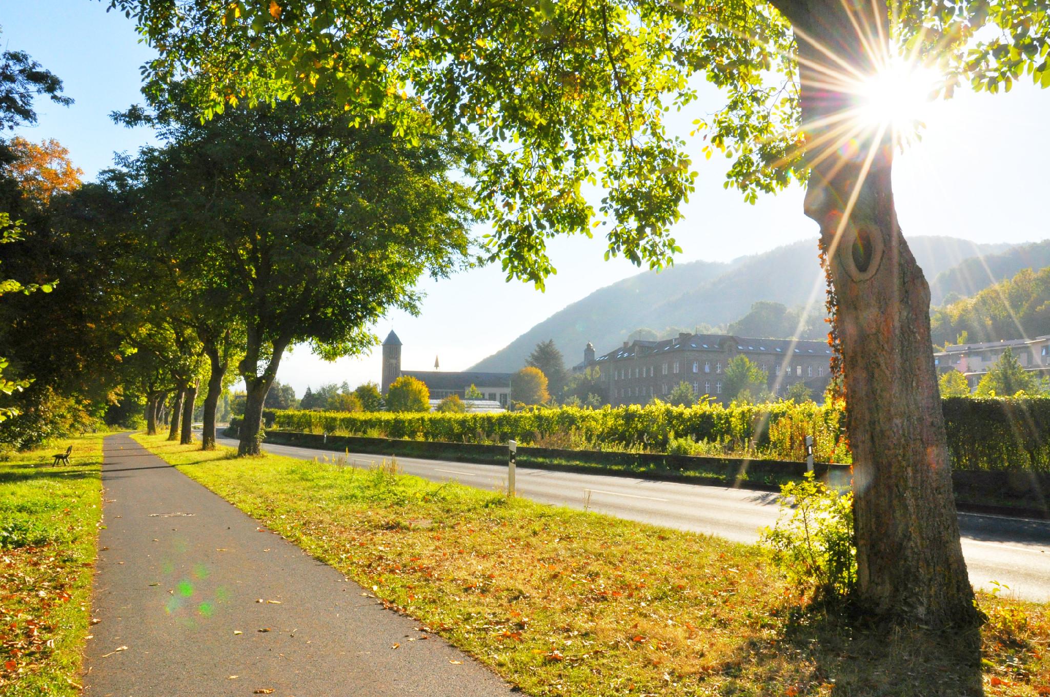 Kloster Ebernach Winzer