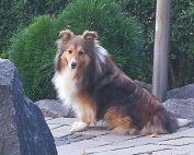 Hund Sally